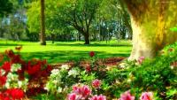 Spring in the park - Hyde Park w Sydney w Australii