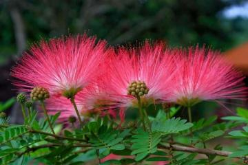 Pink flowers - pink, coniferous, leaves, white (6×6)
