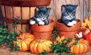 Two kittens - charming two kittens