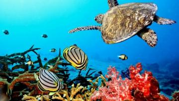 Underwater life - colorful puzzle jigsaw