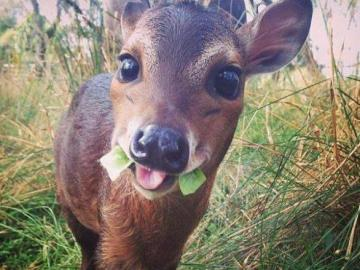 lovely animals - a small fawn in the forest