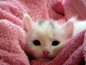 pets and animals - beautiful animals and even more beautiful