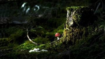 Toadstool - Toadstool with a mossy trunk