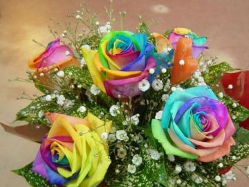 The Rainbow Rose - The Rainbow Rose.Colorful flowers.