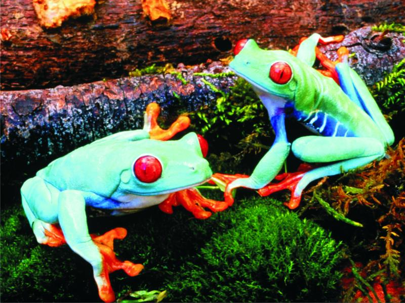 Colorful trees - Colorful trees with poisonous frogs (10×10)