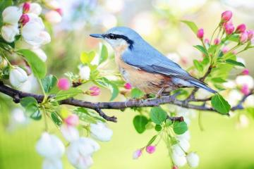 beautiful spring - the picture shows spring