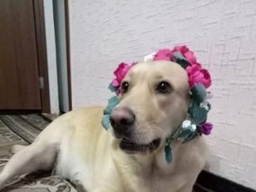 lovely animals - male in a colorful headband