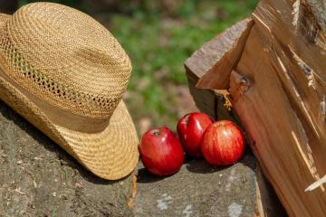 spożywka - apples on the stone and a hat next to it