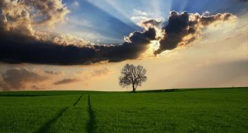 Rural landscape. - Rural landscape with a lonely tree.