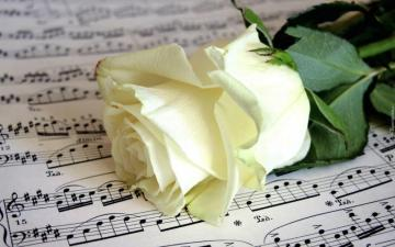 composite - white rose on notes (10×10)