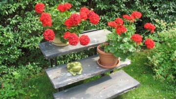 Garden decorations with stairs - Garden decorations with stairs.