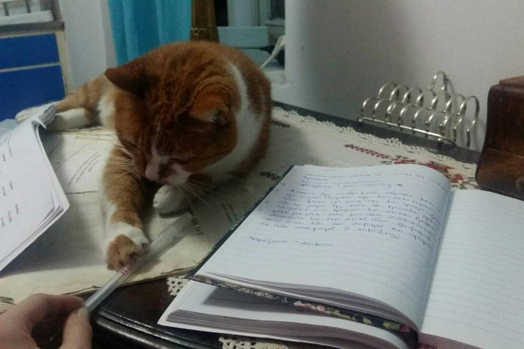 Cat on the lesson - The cat disturbs learning (11×9)
