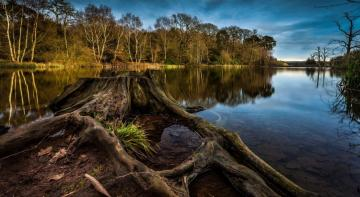 Beautiful place - Lonely tree trunk in the water