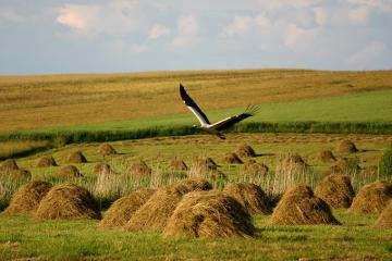 Hay mounds. - Sky. Hay mounds on the meadow.
