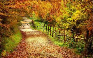Autumn road. - Autumn road in the forest.