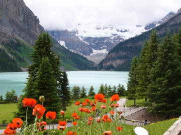 Mountain lake. - Poppies with a mountain lake in the background.