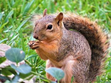 squirrel - A cheerful and happy squirrel