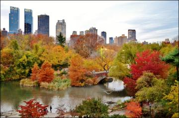 Central Park. NY. - Autumn in Central Park in New York.