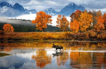 Wyoming. USA. - Snake River in Wyoming in the USA. More like the Moose River. I do not see any snake.