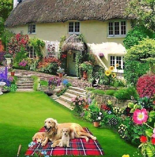 A beautiful house with a garde - House with garden, dogs (14×12)