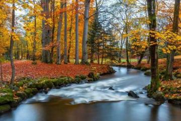 Autumn in the park. - Autumnal colorful picture. Colorful autumn leaves, autumn leaves in different colors.