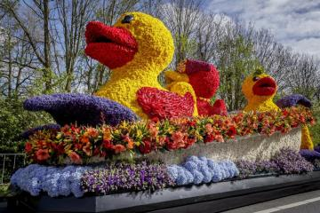 Flower parade in the Netherlan - Flower parade in the Netherlands (11×10)