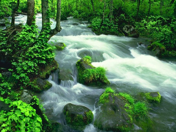 such a rivulet - river, stream, forest, stones, greenery (15×15)