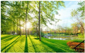 Spring forest - Nice trees, forest. Spring, sun