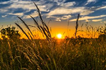 Meadow at sunset. - Meadow at sunset.