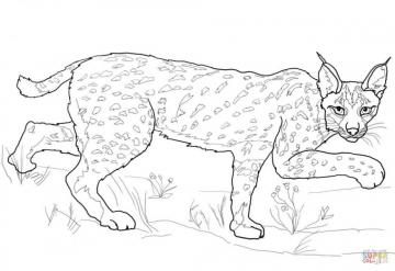 Lynx or loin - Lynx of the Divine Comedy