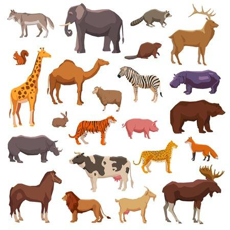 Animals - Exotic and domestic animals (7×7)