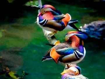 Colorful birds on branches. - Colorful birds on branches.