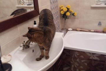 Give me a drink - Give me a drink, or a cat in the bathroom.