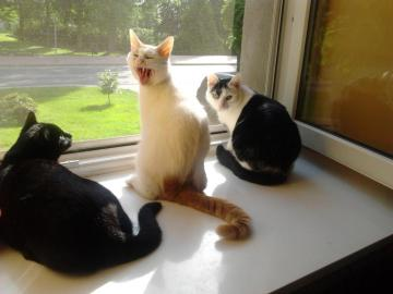 cats by the window - Kaja, Pansy and Antoś and the view from the window
