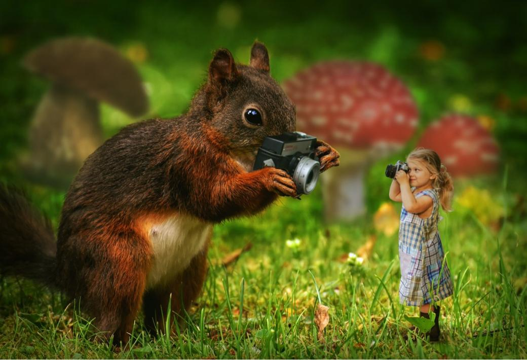 Photo-Duell - Girl and squirrel photographing each other