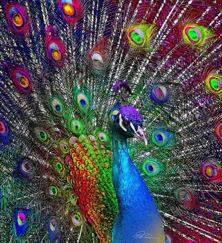Painted Peacock - Puzzle: painted peacock (10×10)