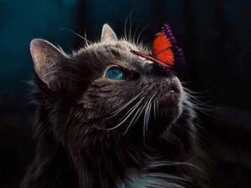 Cat with a butterfly on the nose - Cat with a butterfly on the nose