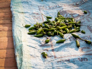 A handful of chillis sits on a - Pile of green chili on sack. New Zealand