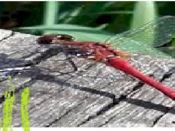 dragonfly and nature - this is the landscape with dragonfly on it.