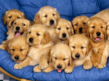 Little dogs - A lot of little pooches