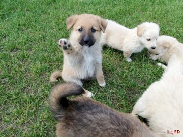 Adorable puppies - Little adorable puppies