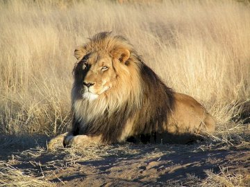 animals - He is said to be the king of animals