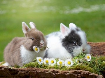 Easter - We are also waiting for Easter